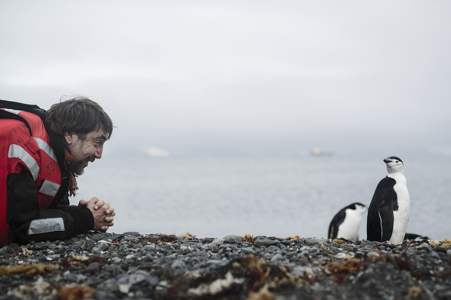 Actor and Antarctic ambassador Javier Bardem next to a chinstrap penguin on King George Island, the Antarctic.