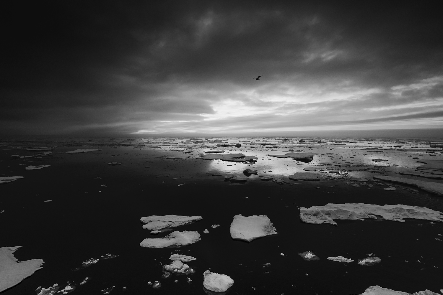 The extent of the Arctic pack ice, Greenland Sea, Northeast Coast of Greenland. Temperatures rise faster in the Arctic than anywhere else, and while scientists are warning of the mounting risks of climate change, oil companies regards the decline of sea ice as a new business opportunity.