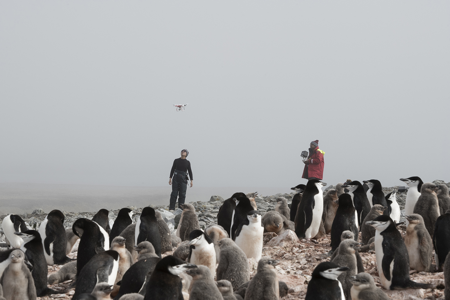Low Island, Antarctica.Scientists Yang Liu and Vikrant Shah from Northeastern University count the chinstrap population with the help of a drone and then uses machine learning to do automated count of penguin colonies in Antarctica.*This picture was taken in 2020 during the Antarctic leg of the Pole to Pole expedition under the Dutch permit number RWS-2019/40813