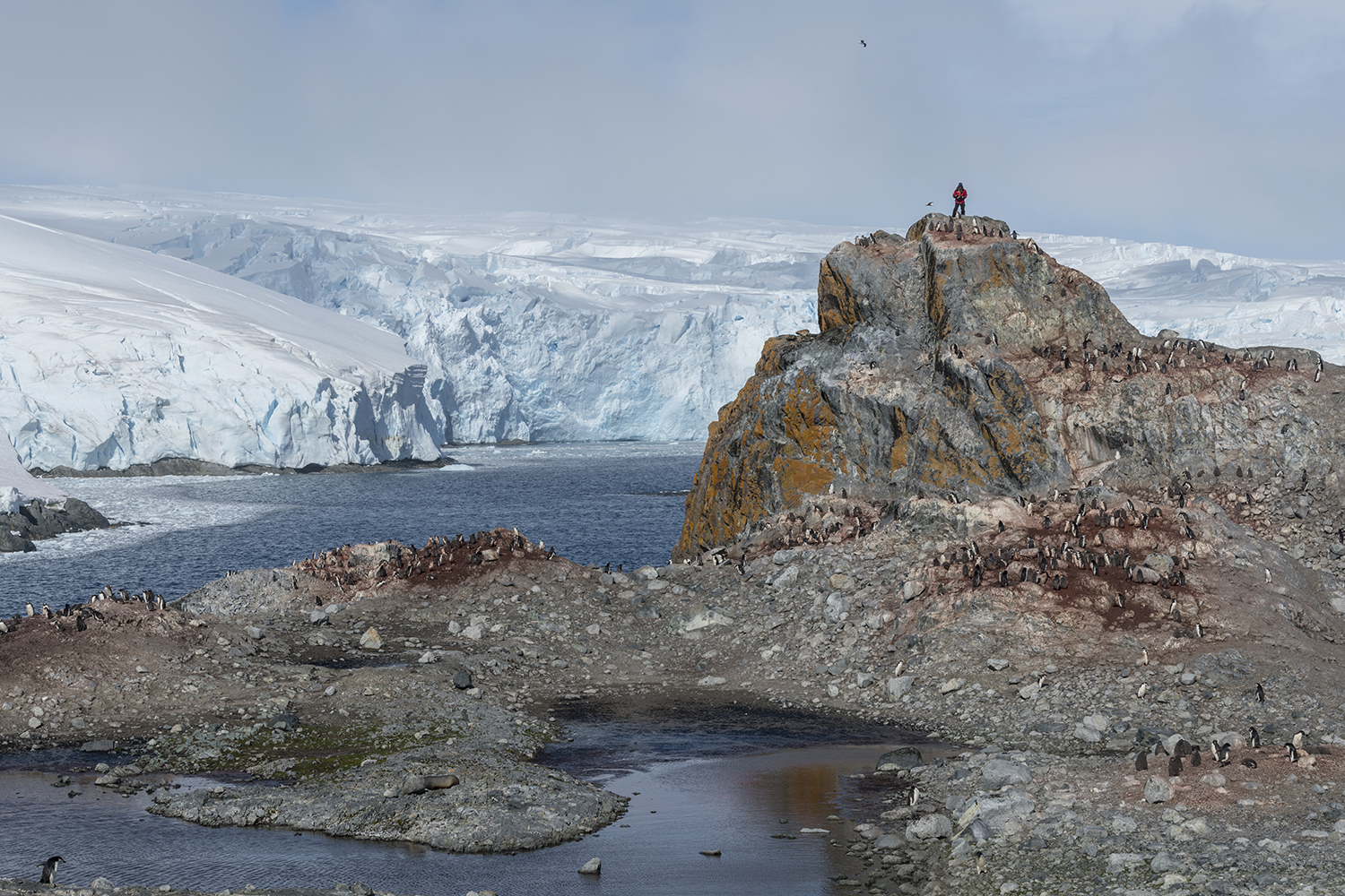 Penguin scientist Steven Forrest from Stony Brook University climbing up a rock to count chinstrap penguin nests, to collect data about the population, on Anvers Island in the Antarctic.
